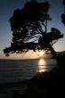 Na pláži pri západe slnka - Borovice pri plážach, výberné miesta na dovolenku pri mori, dlhé pláže, vôňe borovíc, zvuk mora a k tomu takýto západ slnka. Už nech je leto a dovolenky v Chorvátsku.
