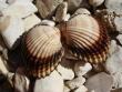 Potápanie Chorvátsko - Potápanie v mori prinieslo aj nejaké pekné mušličky
